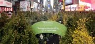 Una foresta per Time Square